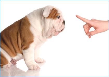 scold_puppy